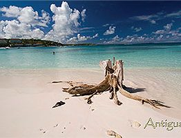 Long bay Antigua Postcard
