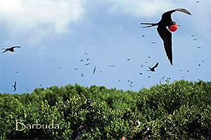 Bird Sanctuary, Barbuda