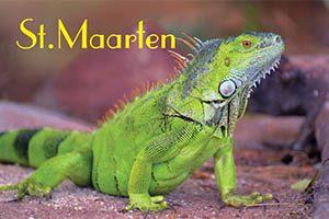 Iguana in Sint Maarten fridge magnet 037 by kimagic
