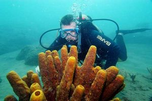 SCUBA Diver Frank Corlis in warm waters of Montserrat