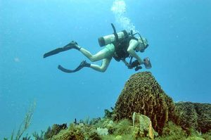 Underwater photography in Montserrat