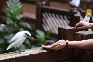 Exotic colorfull birds in Edward Youde Aviary in Hong Kong
