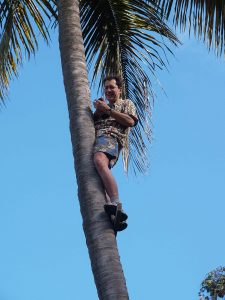 Travel Photographer Igor Kravtchenko climbing palm tree during the photo workshop in Montserrat on Feburary 2007